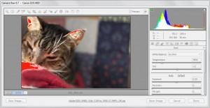 How to Create a DNG File in Adobe Camera Raw