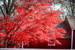 tree_barn_1